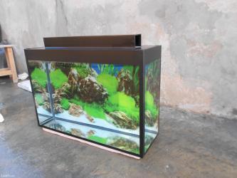 Bakı şəhərində Akvarium teze 60-45-20