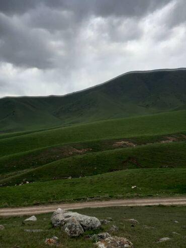 чолпон ата комнаты in Кыргызстан | ЖҮРГҮНЧҮЛӨРДҮ ТАШУУ: Региондук ташуу, Ысык-Көль, Чолпон-Ата Жеңил | 6 орундук