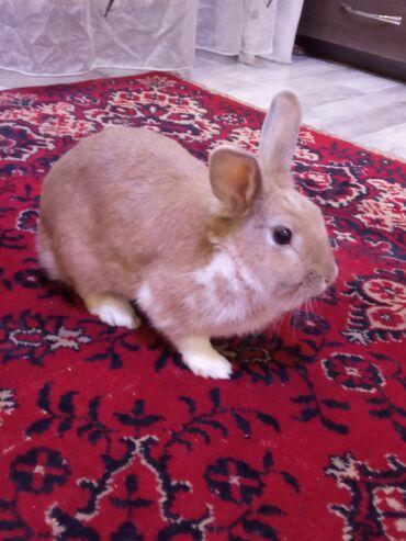 526 объявлений: Продаю декоративного кролика вместе с клеткой, опилки в подарок