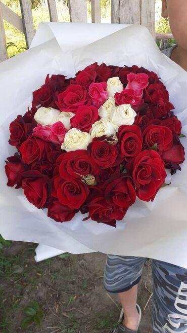 Голландские розы оптом. Любые размеры. Обращайтесь по номеру есть