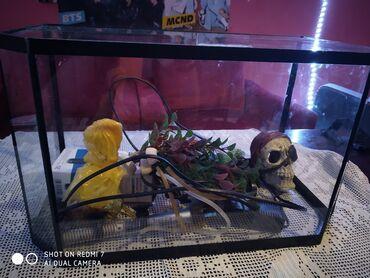Akvarijum sa dodatnom opremom Akvarijum od 50l3 pupme1 grejacUkrasi I