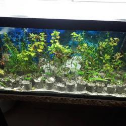 bmw-1-серия-120i-mt - Azərbaycan: Akvarium ucun tebii bitkiler. 1 ededi 1 manat 50 qepik. 5 ededden cox