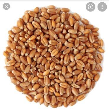 Животные - Александровка: Продаю пшеницу хорошего качества в мешках с доставкой