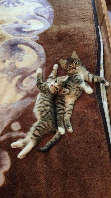 Отдаём котяток в хорошие рукиКот и кошечка.Кушают самостоятельно, в