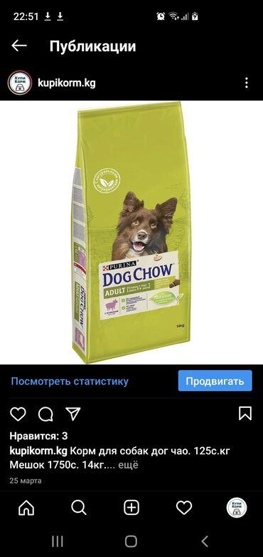 корм для собак купить оптом в Кыргызстан: Собачий корм в ассортименте по оптовым ценам. Мешками и на вес
