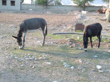 Животные - Садовое (ГЭС-3): За два просим срочно
