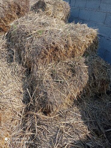 Услуги ветеринара - Кыргызстан: Самат сатам кирпич куйганга жарайт 50 сомдон