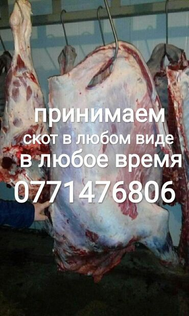 jelektriki na vyzov в Кыргызстан: В колбасный цех принимаем всегда