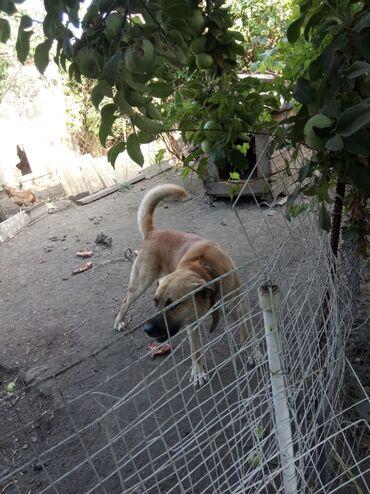 Животные - Мыкан: Собаки