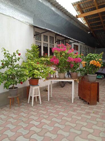 Семена и уличные растения - Сокулук: Продаю цветы по всем вопросам обр по тел