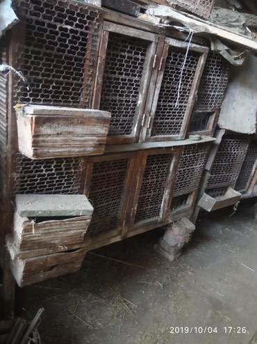 Зоотовары - Кок-Ой: Продаю клетки для кроликов