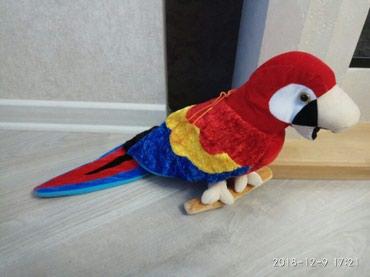 ара в Кыргызстан: Мягкая игрушка попугай Ара, новая большая