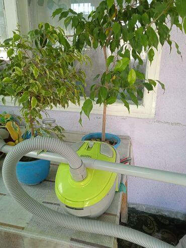 продам дом беловодск в Кыргызстан: Продам пылесос. Пользовались мало. Находимся в Беловодске