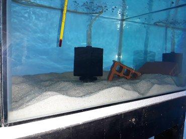 Bakı şəhərində Aq qum 1kg 2azn akvariumu cox gozel gosterir