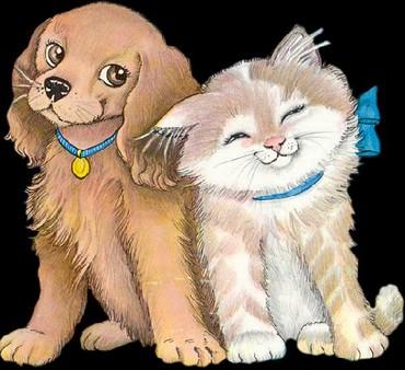 Платная передержка домашних животных, кошек и собачек не крупных пород