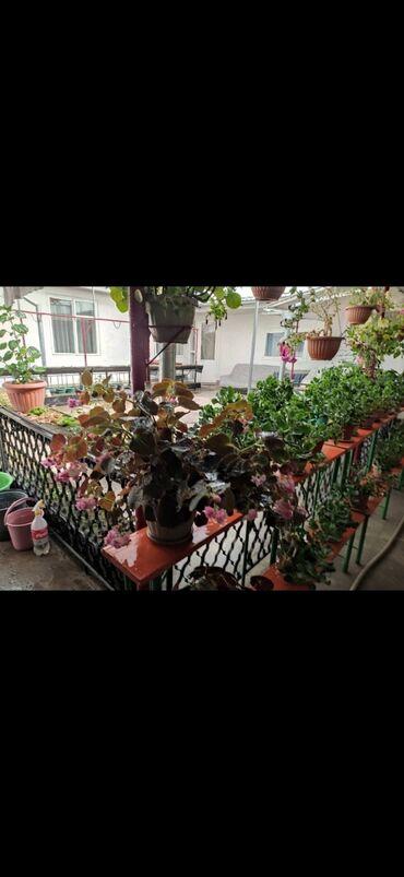 634 объявлений: Продажа живых комнатных цветов срочно в Караколе! В связи с переездом