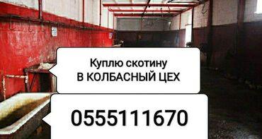 Работа в оше швейный цех - Кыргызстан: Куплю | Коровы, быки, Лошади, кони | Любое состояние, На забой, на мясо