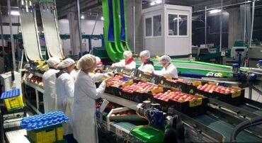 Rad u nemackoj - Srbija: POTREBNE RADNICE Traze se Radnice za rad na prebiranju voca i povrca u