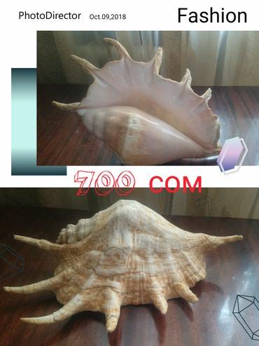 Продаю натуральные ракушки из в Бишкек