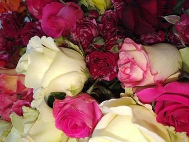Саженцы - Кыргызстан: Продаю корни роз, разные цвета. Есть кустовые и вьющиеся. Цена