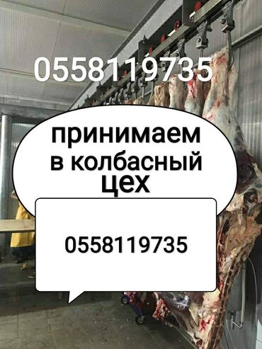 jelektriki na vyzov в Кыргызстан: Принимаем скот в колбасный цех в любом виде в любое время