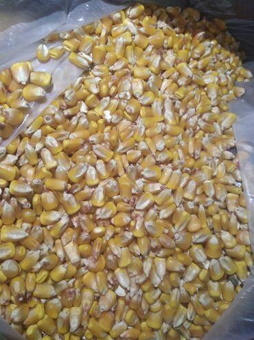 Кыздар сатылат москва - Кыргызстан: Куплю кукурузу жугору в больших обёмах