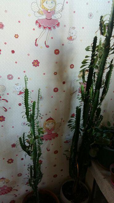 Продаю цветок 1.20 см в высоту