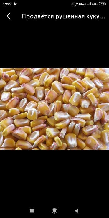 серпянка цена бишкек в Кыргызстан: Продаю кукурузу рушенная. Кара-Балта(Малтабар)