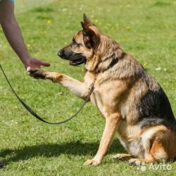 Профессиональная дрессировка собак с выездом