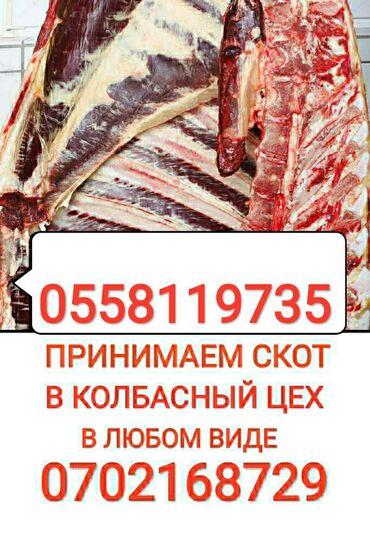 jelektriki na vyzov в Кыргызстан: Принимаем скот и вынужденый забой скота в колбасный цех