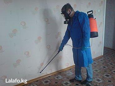 Уничтожаем постельных клопов. Обработка подвалов, производственных и в Бишкек