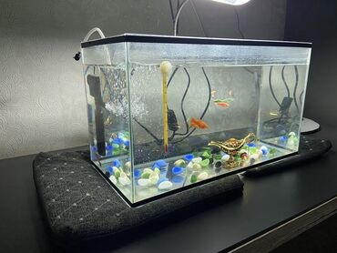 Аквариум 25 литров Оксигенератор - 2 Градусник Рыбки - 6 Лампа
