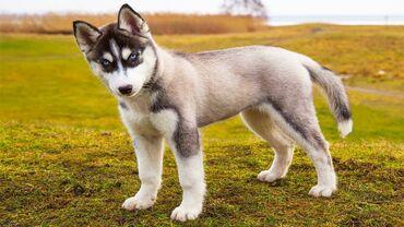 Всё для собак : поводки ошейники намордники и