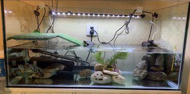 oğlan üçün məktəb forması - Azərbaycan: Akvarium uzunluğu 90, eni 40, hündürlüyü 45. 10 mm zavod radajı ilə şü