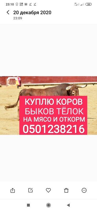 Животные - Сокулук: А также вынужденый забой скота в любое время колбасный цех