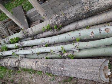 Дерево срубленное, тополь, терек, 11шт (4,8. 4,3. 4,9. 4,5. 4,8
