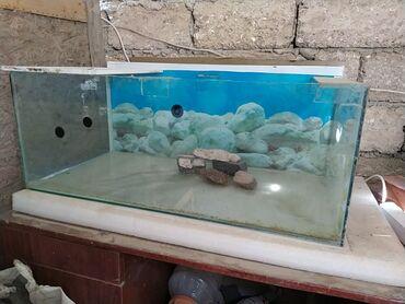 Akvarium 30*40*80 icinde balaları ayrı saxlamaq üçün ara kəsmədə var