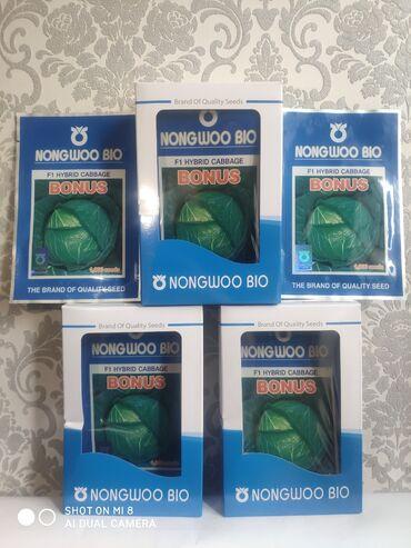 Куплю грунт - Кыргызстан: Семена: Капуста Г. Бонус фирма NongWooBio(Корея)Раннеспелый гибрид