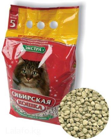 кошка персидская шиншилла в Кыргызстан: Напол. Сиб. Кошка, Экстра, д/длинош. впитыв. 5л/2,8кг
