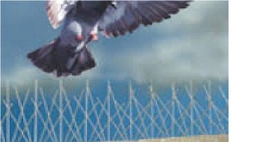 Zaštita za klimu, rasterivač golubova, zica protiv golub - Nis