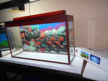 - Azərbaycan: Akvarium teze uzunu 70 sm hundurluyu qapaqla 45sm eni 20 sm qapaqi