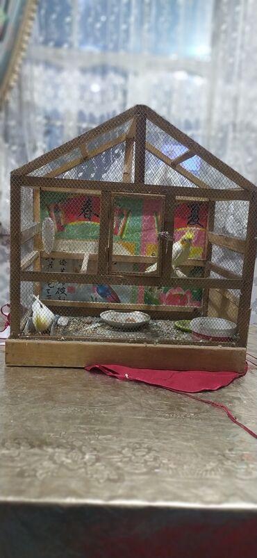 Продается Папугай Нимфа пара 2700 сом рабочая взрослая домик (клетко