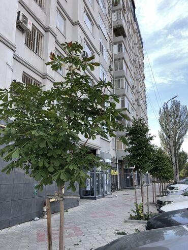 купить переходник с телефона на телевизор в Кыргызстан: Продается квартира: Элитка, Таш Рабат, 2 комнаты, 74 кв. м