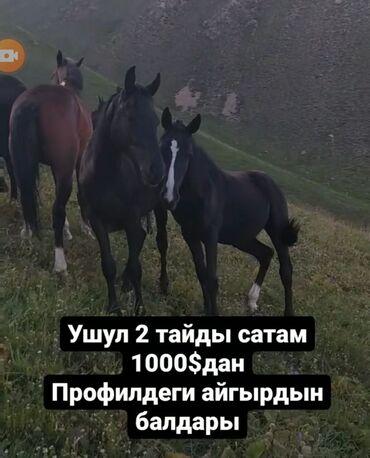14 объявлений   ЖИВОТНЫЕ: Другие животные