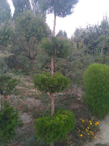 Другие товары для сада в Кызыл-Кия
