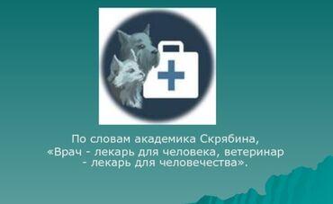 ветеринар бишкек in Кыргызстан | УСЛУГИ ВЕТЕРИНАРА: Высококвалифицированный, Дипломированный ветеринарный врач. Все ветер