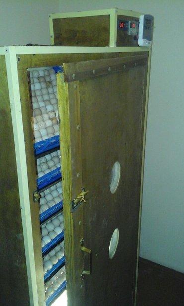 Bakı şəhərində inkubatorlarin yigilmasi