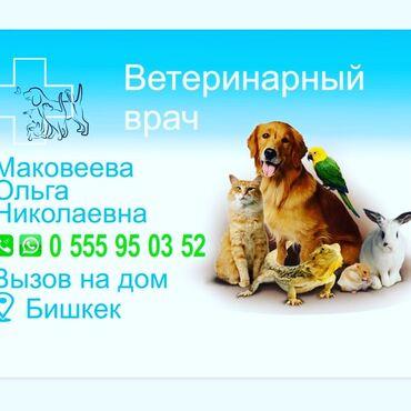 Услуги ветеринара - Кыргызстан: Вет.врач вызов на дом 300 сом