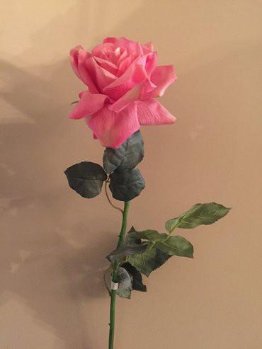 Роза декоративная (Италия)-высота 95 см. в Бишкек