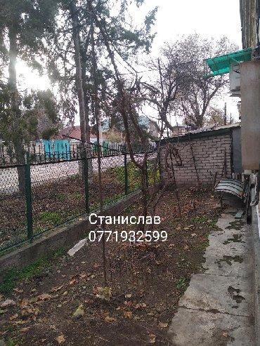 убираем м в Кыргызстан: Посадка обрезка и обработка винограда плодовых и хвойных деревьях
